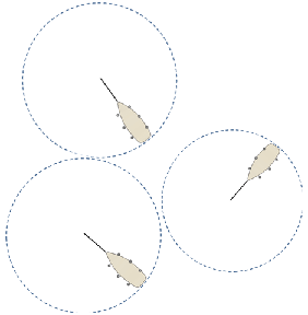 Circulo de borneo